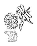 Libellula da colorare 9