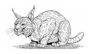 Tigre da colorare 40