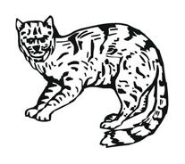Tigre da colorare 41