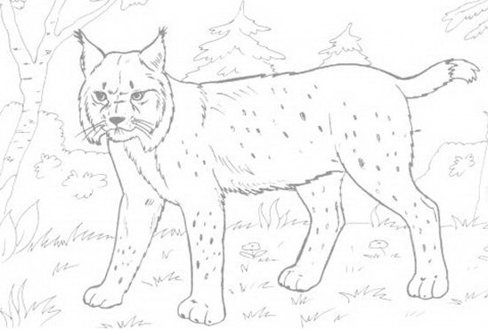 Tigre da colorare 43