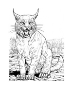 Tigre da colorare 44