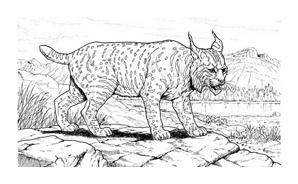 Tigre da colorare 45