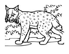 Tigre da colorare 49