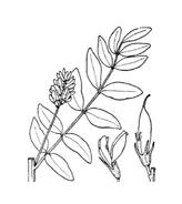 Arbusto da colorare 27