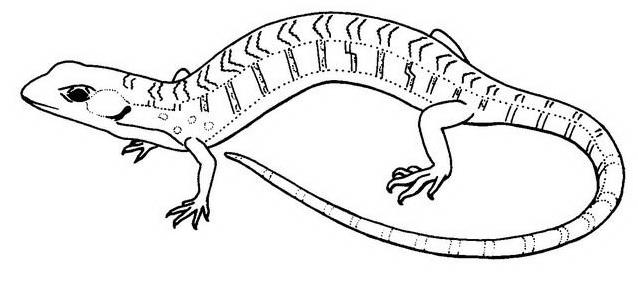 Serpente da colorare 53