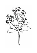 Verdura da colorare 46