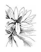 Fiore da colorare 312