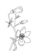 Fiore da colorare 314