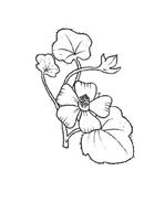 Fiore da colorare 315