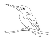 Uccello da colorare 185