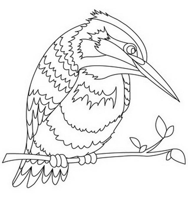 Uccello da colorare 186