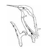 Uccello da colorare 187