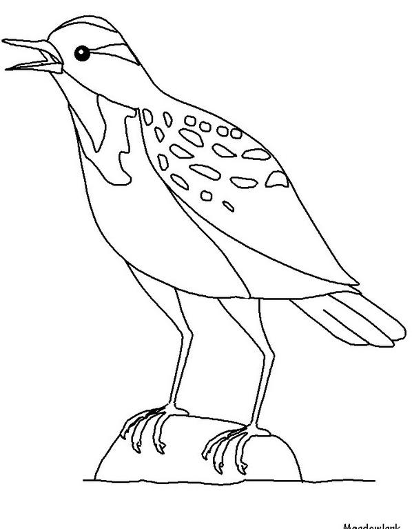 Uccello da colorare 188