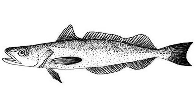 Pesce da colorare 75