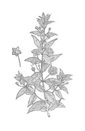 Arbusto da colorare 29