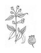 Arbusto da colorare 31