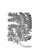 Arbusto da colorare 32