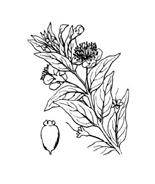Arbusto da colorare 33