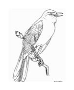 Uccello da colorare 190