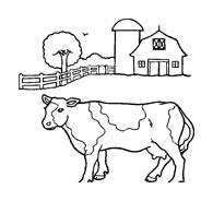 Mucca e bufalo da colorare 7