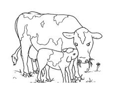 Mucca e bufalo da colorare 9