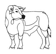 Mucca e bufalo da colorare 12