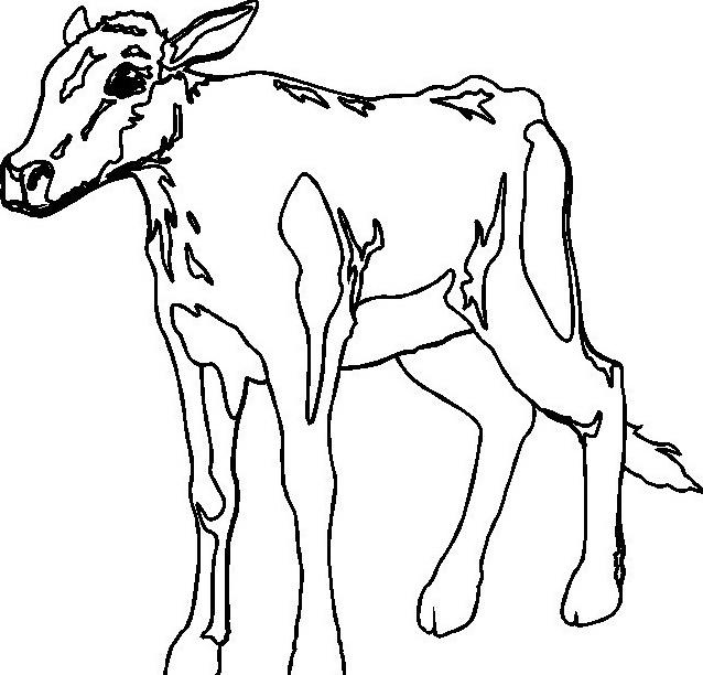 Mucca e bufalo da colorare 13