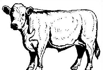 Mucca e bufalo da colorare 16