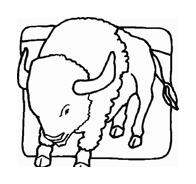 Mucca e bufalo da colorare 18