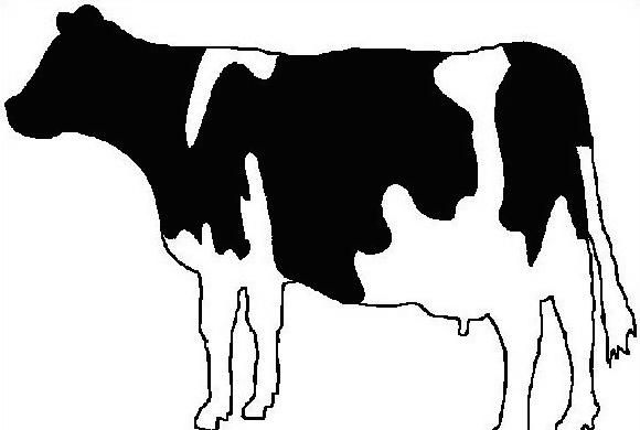 Mucca e bufalo da colorare 21