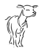 Mucca e bufalo da colorare 27
