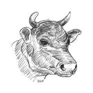 Mucca e bufalo da colorare 28