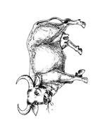 Mucca e bufalo da colorare 34