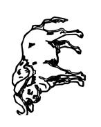 Mucca e bufalo da colorare 35