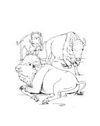 Mucca e bufalo da colorare 40