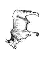 Mucca e bufalo da colorare 45