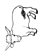 Mucca e bufalo da colorare 53