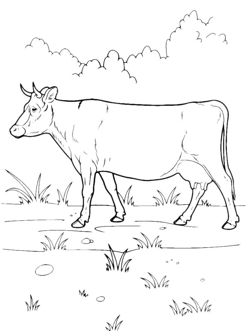 Mucca e bufalo da colorare 55