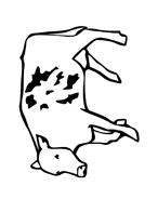 Mucca e bufalo da colorare 57