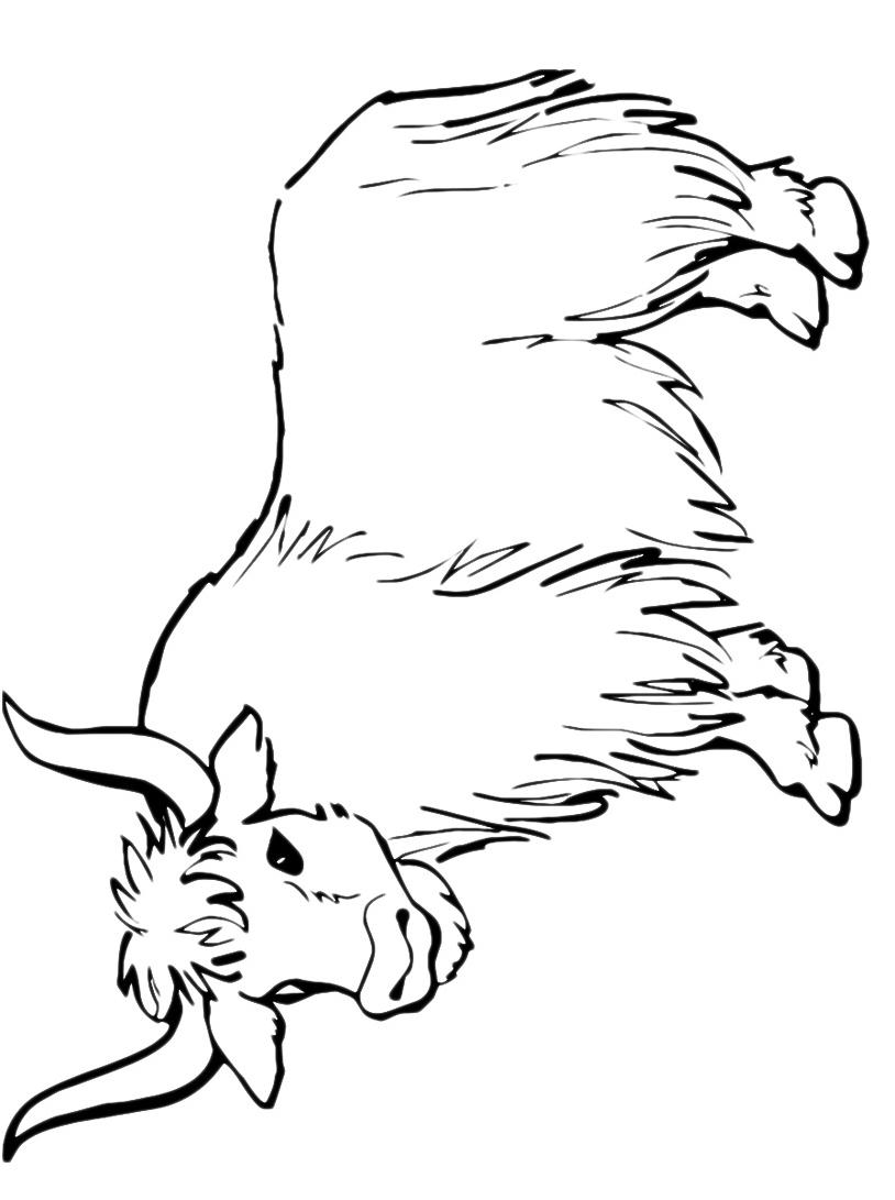 Mucca e bufalo da colorare 64