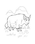 Mucca e bufalo da colorare 66