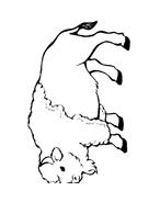 Mucca e bufalo da colorare 72