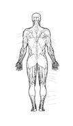 Corpo umano da colorare 80