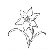 Fiore da colorare 319