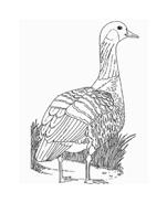 Uccello da colorare 191