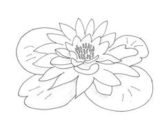 Fiore da colorare 320