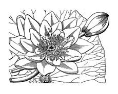Fiore da colorare 321