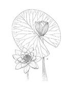 Fiore da colorare 326