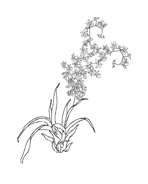 Fiore da colorare 329