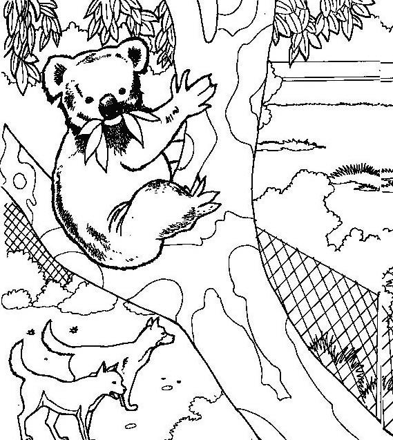 Orso da colorare 39